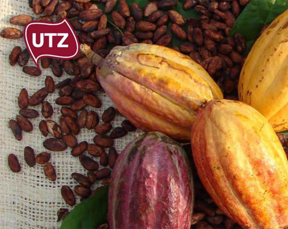 Nachhaltig angebauter Kakao